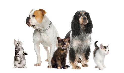 Produits Vétérinaire à vence (06140) Pharmacie du Grand Jardin Chien et Chat Anti-puce, Anti-tique Vermifuge Animaux de compagnie